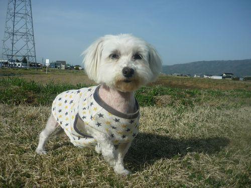 保護犬アニーちゃん