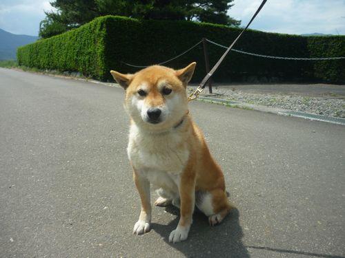 保護犬鼓太郎君